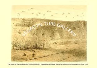 The Home of The Sand Martin - Cotyle Riparia) Sandy Station, Great Northern Railway 27th June 1877
